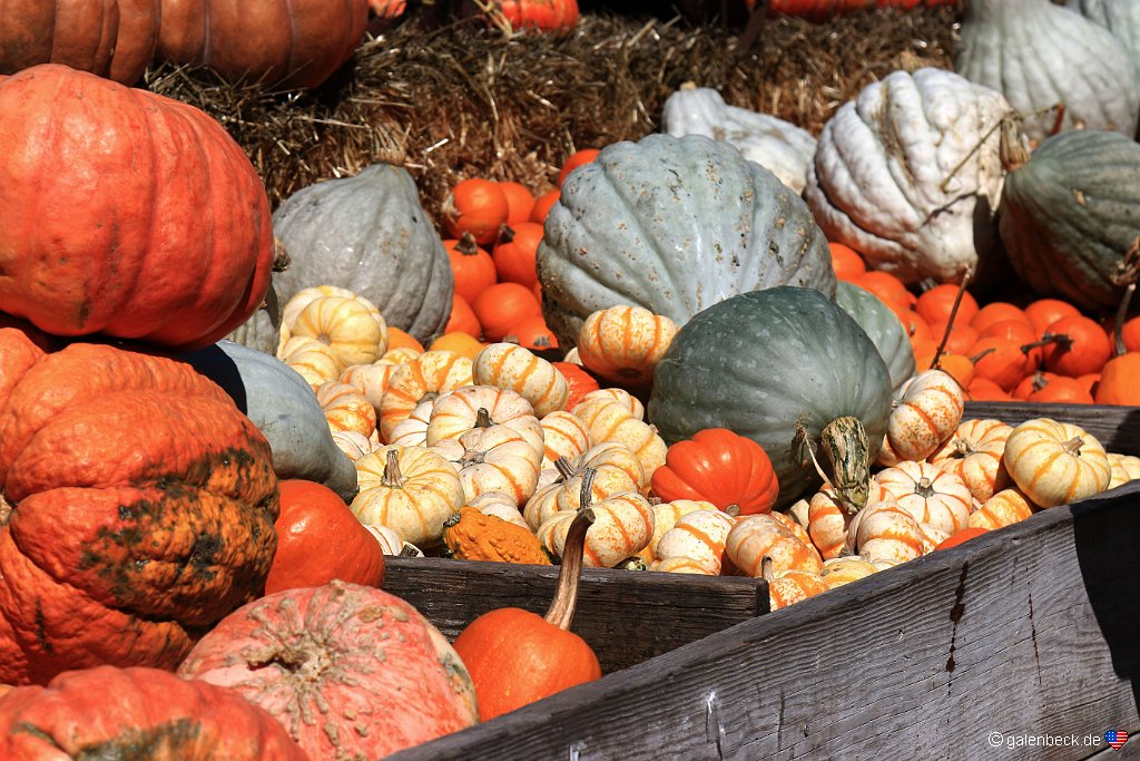 Aratas Pumpkin Farm